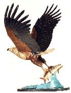 Online Art of artist Bruce McClunan artwork titled Fish Eagle